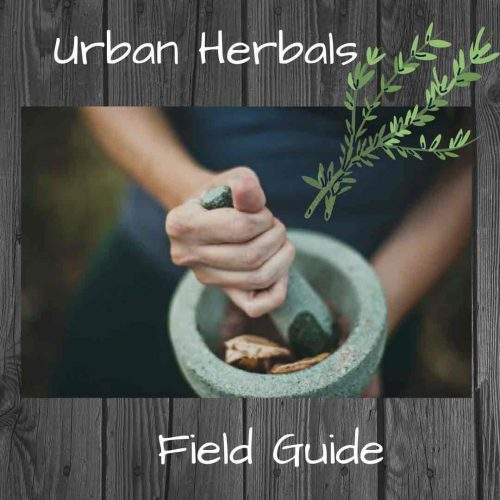hands-grinding-herbs-pestle-and-mortar